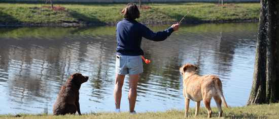 Dog Owner throwing fetch toy into the Dog Park lake